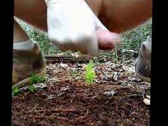 Forest insemination vidz 2