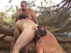 Bears of vidz Spain