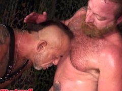 Silver wolf vidz and bear  super in bareback action