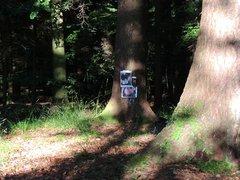 Tribute fuer vidz Sandy im  super Wald
