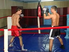 Two Boxers vidz Love to  super See Cock