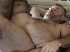 hairy bears vidz 2
