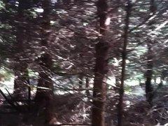 Im Wald vidz bei Stttgart