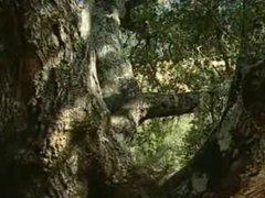 In The vidz Pines