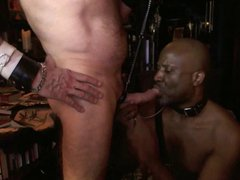 Collared leahed vidz Black Slave  super Suck White Master