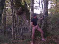 in the vidz forest