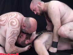 Chubby bears vidz bareback buttfucked