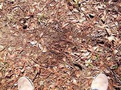 pissing in vidz woods