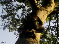 Indian Tarzan vidz Boy Sex  super In Jungle Wood
