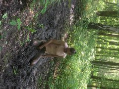 play in vidz mud
