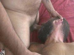 Sexy Daddy vidz Brian Davilla  super Bareback Fucks and Breeds Hairy Bottom