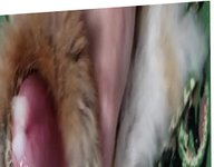 Rabbit fur vidz rub completion