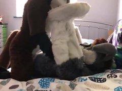 Brown Canine vidz Fucks a  super Gray Bunny (Furry)