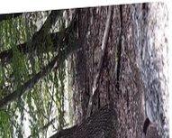Als Stute vidz im Wald