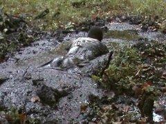 mud dress vidz 45